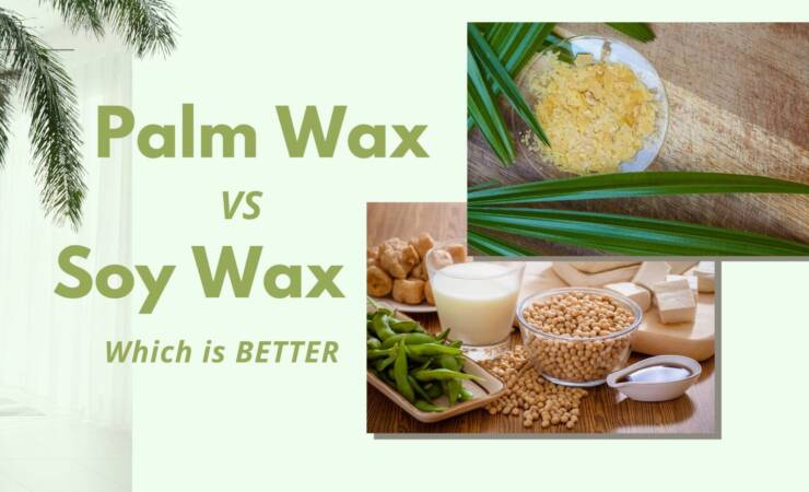 Palm wax vs Soy wax which is better?
